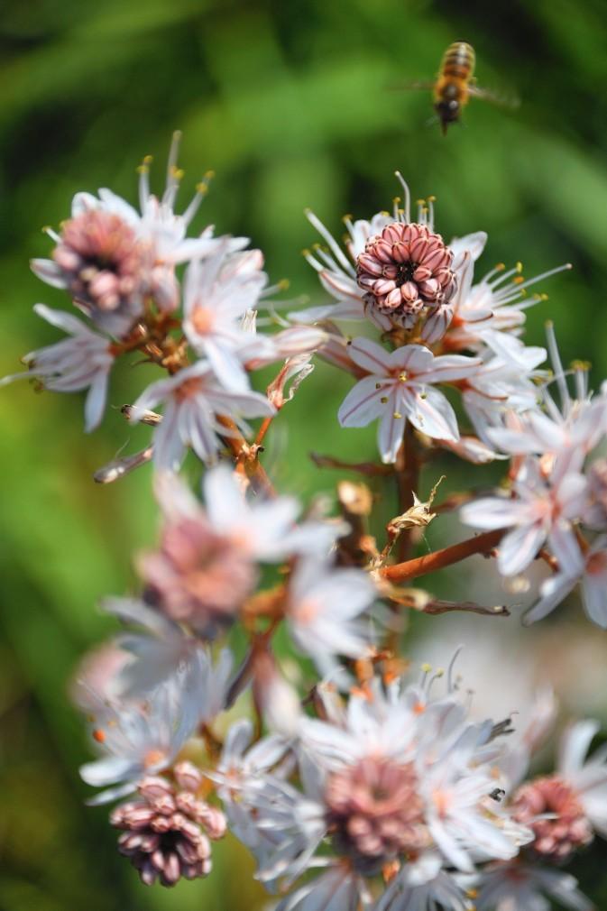 Springtime wildflowers on Kythera