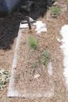 Tsigouni plot (2 of 2) at Potamos