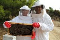 Beekeepers Milan