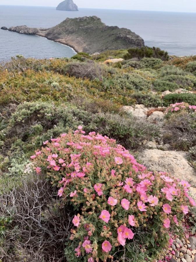 Cape Trechilos