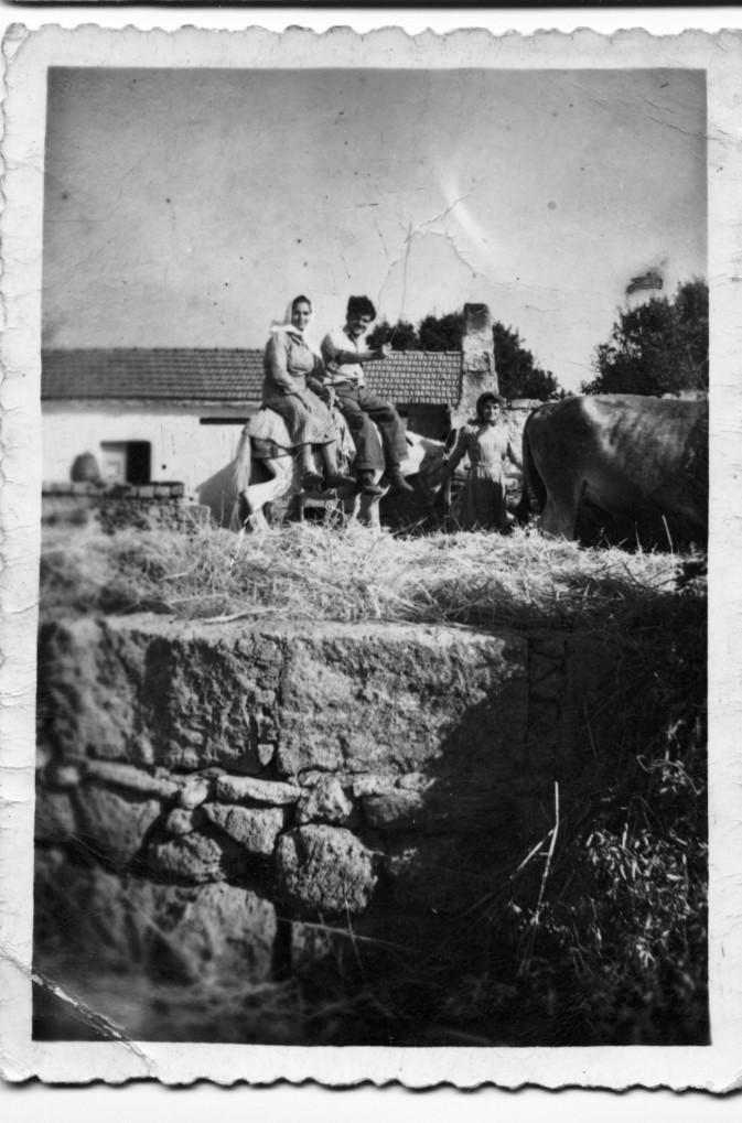 Donkey Riding Mitata