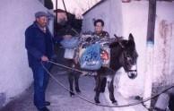 The donkey man III