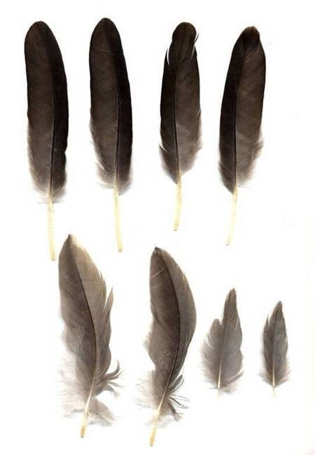 Heron Feathers