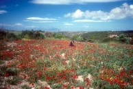 Spring in Kythera