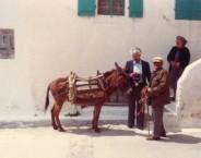 The donkey man VII