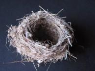 Bird nest from Paliopoli