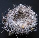 Shrike Nest