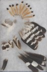 Hoopoe feathers