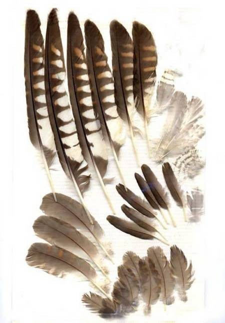 Feathers from Avlemonas
