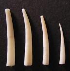 Tusk Shells