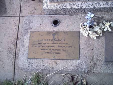 Vangis - Harry - Bingara NSW