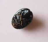 Green Beetle, underside